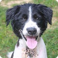 Adopt A Pet :: Noah - Rossville, TN