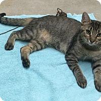 Adopt A Pet :: JULIET - Delray Beach, FL
