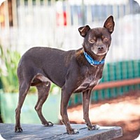 Adopt A Pet :: Gilligan - Windsor, CA