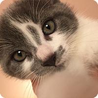 Adopt A Pet :: Splash - Toronto, ON
