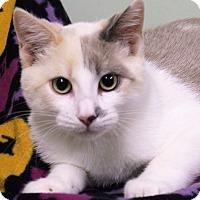 Adopt A Pet :: Claire - Murphysboro, IL