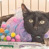 Adopt A Pet :: Enya - New York, NY