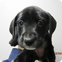 Adopt A Pet :: Baby Butter - Adoption Pending - Rockville, MD