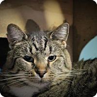 Adopt A Pet :: Feldspar - West Des Moines, IA