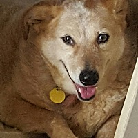 Australian Cattle Dog Mix Dog for adoption in Cranston, Rhode Island - Sally aka JAYLO