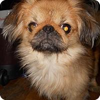 Adopt A Pet :: Blake - Livonia, MI