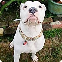 Adopt A Pet :: Neno - Baton Rouge, LA