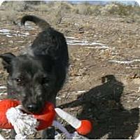 Adopt A Pet :: Winnie - Thatcher, AZ