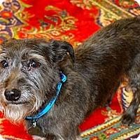 Adopt A Pet :: Trudy - Homewood, AL