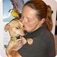 Adopt A Pet :: Benny - Toms River, NJ