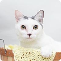 Domestic Shorthair Cat for adoption in Valley Falls, Kansas - Natasha