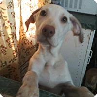 Adopt A Pet :: Donavan - Homer, NY