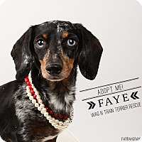 Adopt A Pet :: Faye-adoption pending - Omaha, NE