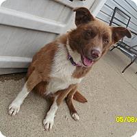 Adopt A Pet :: queen - mooresville, IN