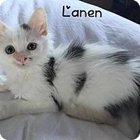 Adopt A Pet :: Lanen - Island Park, NY