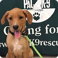 Adopt A Pet :: Dodge - New Oxford, PA