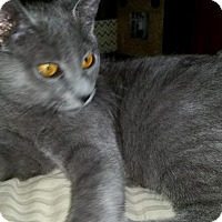 Adopt A Pet :: Copper - Birmingham, AL