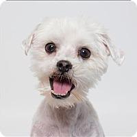 Adopt A Pet :: Poochie - San Luis Obispo, CA