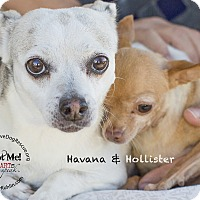 Adopt A Pet :: HAVANNA - Inland Empire, CA