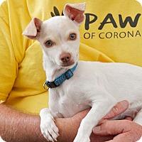 Adopt A Pet :: Ringo - Coronado, CA