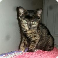 Adopt A Pet :: PIPPA - Winterville, NC
