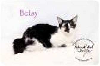 Domestic Shorthair Cat for adoption in Summerville, South Carolina - Betsy