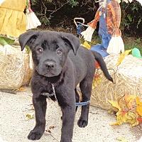 Adopt A Pet :: Herrick - West Chicago, IL