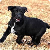 Adopt A Pet :: Black Jack - Glastonbury, CT