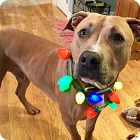 Adopt A Pet :: Murphy - North Haledon, NJ