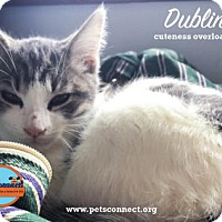 Adopt A Pet :: Dublin - South Bend, IN