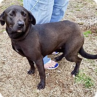 Adopt A Pet :: Fenton - Halifax, NC
