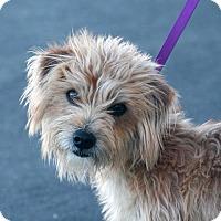 Adopt A Pet :: Sheldon - Palmdale, CA