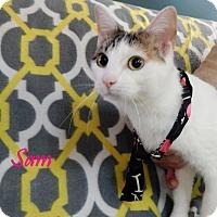 Adopt A Pet :: Sam - Bucyrus, OH