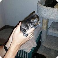 Adopt A Pet :: Autumn (new) - Tampa, FL