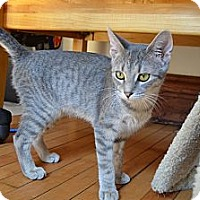 Adopt A Pet :: Lil Bit - Chicago, IL