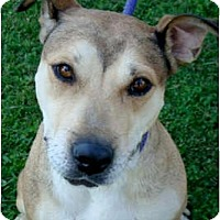 Adopt A Pet :: Missy fun active dog - Sacramento, CA