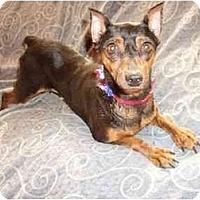 Adopt A Pet :: Fendi - Phoenix, AZ