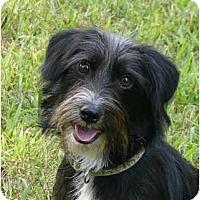 Adopt A Pet :: Fritz - Mocksville, NC