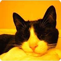 Adopt A Pet :: Gunny - Franklin, NC