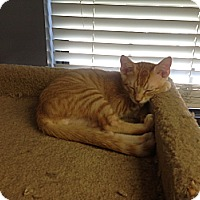 Adopt A Pet :: Mr. Bates - Lake Charles, LA