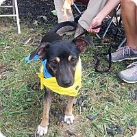 Adopt A Pet :: Bruiser - Huntsville, TN