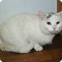 Adopt A Pet :: Emma - Dover, OH