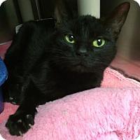 Adopt A Pet :: Charger - Camden, DE