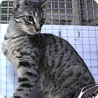 Adopt A Pet :: Pheonix - Mission, BC