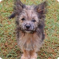 Adopt A Pet :: *Roland - PENDING - Westport, CT