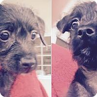 Adopt A Pet :: Donnie & Marie - San Francisco, CA
