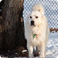 Adopt A Pet :: Flash - Enfield, CT