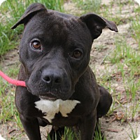Adopt A Pet :: Luxi - Macon, GA