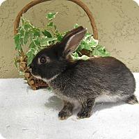 Adopt A Pet :: Toki - Bonita, CA