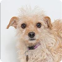 Adopt A Pet :: Barbie - San Luis Obispo, CA